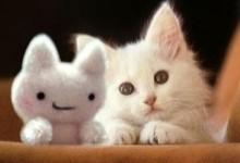 cute-cats-23