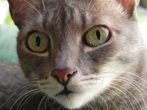 da5a2dce3f1 A visão noturna dos gatos é muito superior à dos humanos. No entanto