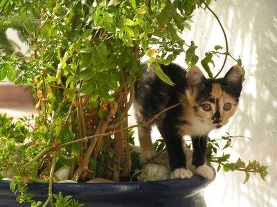 Meu gato est usando meus vasos como banheiro resgatinhos for Plantas de interior lengua de gato