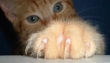 unhas-do-gato