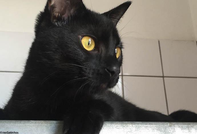 Pretinha Ninja